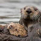 Sea Otter by Tim Grams