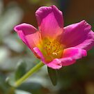 Small Flower  by glennc70000