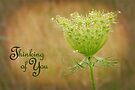 Thinking of You (Card) by Tracy Friesen