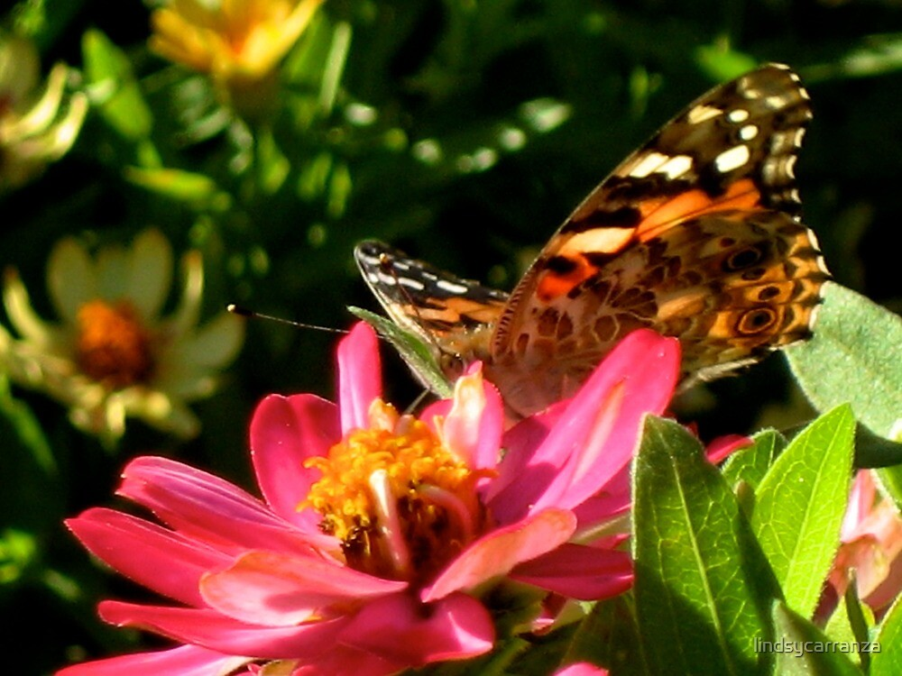Butterfly and a Flower by lindsycarranza
