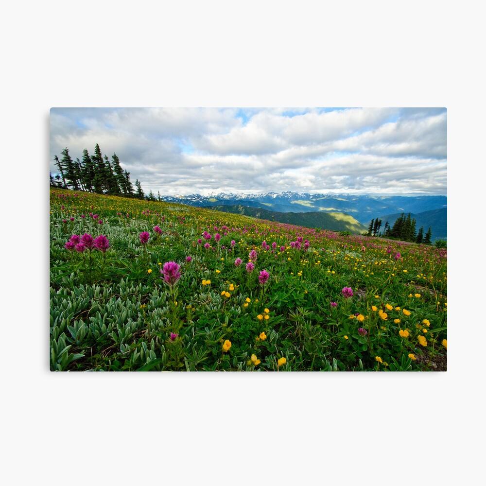 Olympic Mountains Wildflowers Leinwanddruck
