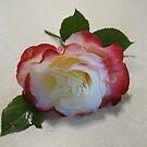 Sunday Rose by Sarah Trent