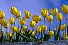 Botanical Gardens Spring—Tasmania by BRogers