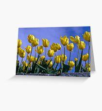 Botanical Gardens Spring—Tasmania Greeting Card