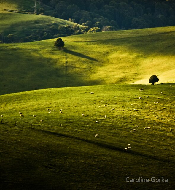 Greens and Golds by Caroline Gorka
