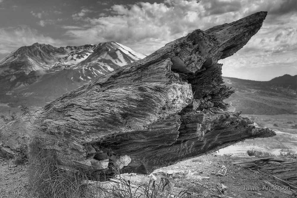 Blown Away (BW) by James Anderson