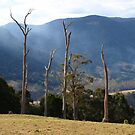 GREAT DIVIDING RANGE by Colin Van Der Heide