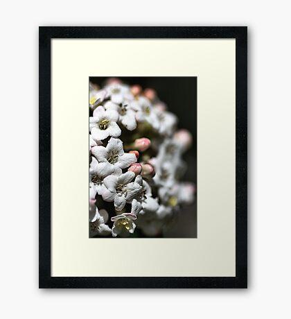 Natures Floral Ball Framed Print
