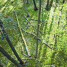 Baumschatten - Schattenbäume by emilys