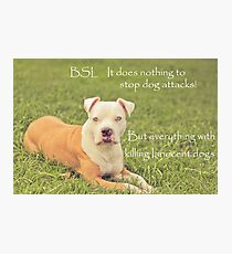 A Definition Of Breed Specific Legislation Photographic Print