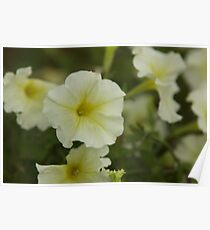 Flower me Poster