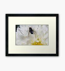 Fly on Flower Framed Print