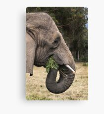 Hungry Canvas Print