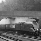 LNER A4 Pacific by Steve  Liptrot