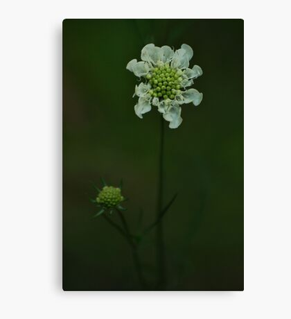 Wild flower of forest Canvas Print