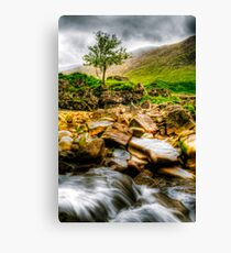 Lone Tree On River Etive Canvas Print