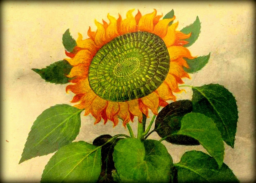 Gorgeous Vintage Botanical Sunflower by Debbie Robbins