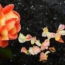 Orange rose and fallen petals by Conor Donaghy