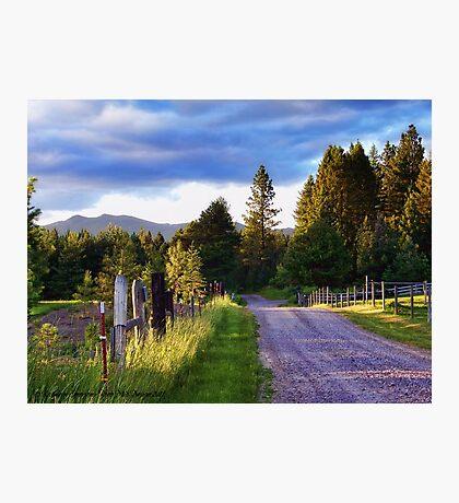 Farm Access Road Photographic Print