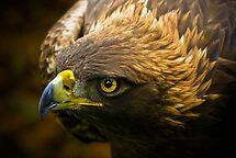 Golden Eagle by Sue Ratcliffe