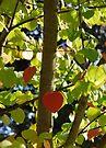 a little heart  by Kyoko Beaumont