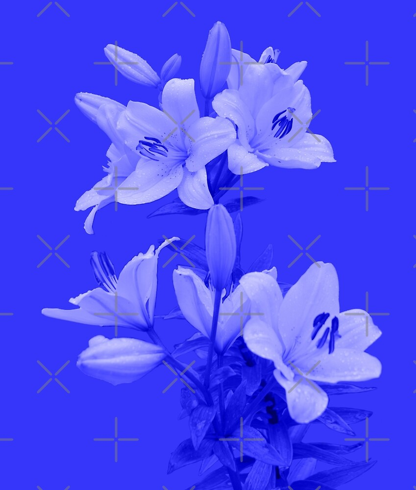 Lilies on Blue Background by SiobhanFraser