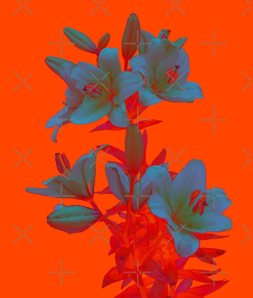 Lilies on a LushLava Background by SiobhanFraser
