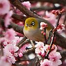 Lost in Blossom by Barb Leopold