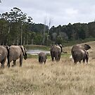 Family of elephants by Anna Phillips