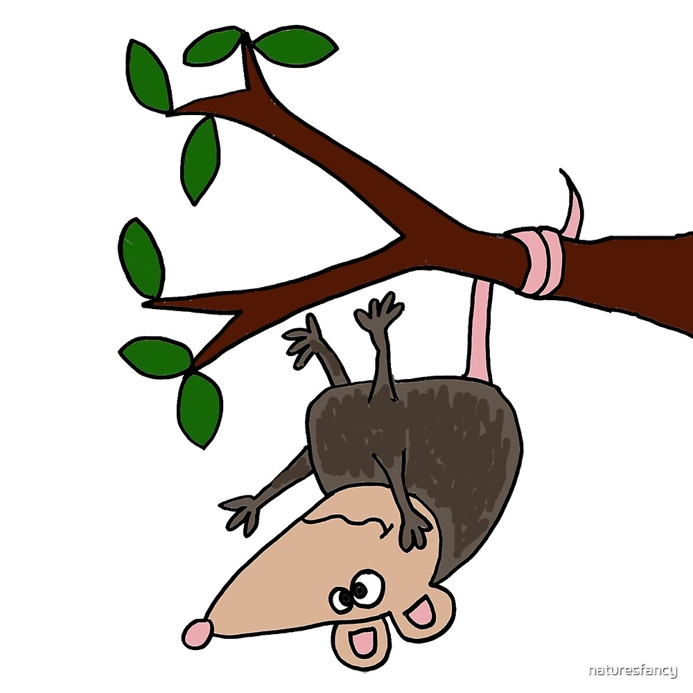 Hilarious Possum Hanging from Tree by naturesfancy