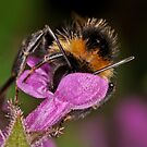 Pollination 33 by Gareth Jones
