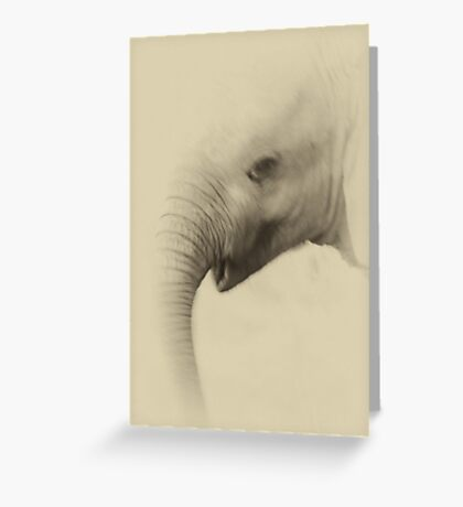 Baby Elephant Portrait Greeting Card