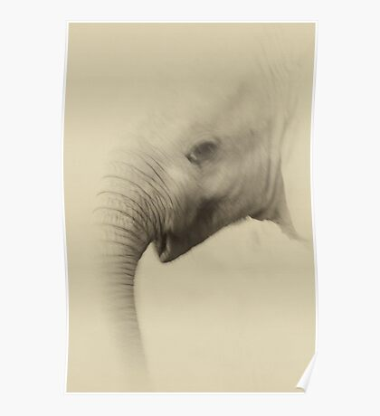 Baby Elephant Portrait Poster