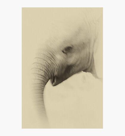 Baby Elephant Portrait Photographic Print