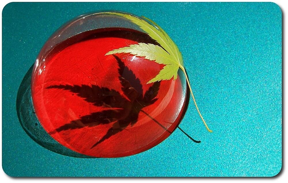 Leaf & Shadow by Jimmy Joe