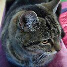 Cool Cat von BlueMoonRose