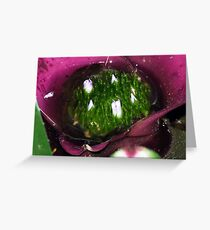 Bromeliad - Little Pond Greeting Card