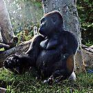 Gorilla and the Sun by Robert Bertino