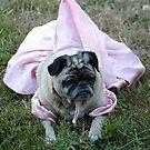 Princess Josie by Jonice