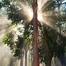 Natural light by Stephanie Johnson