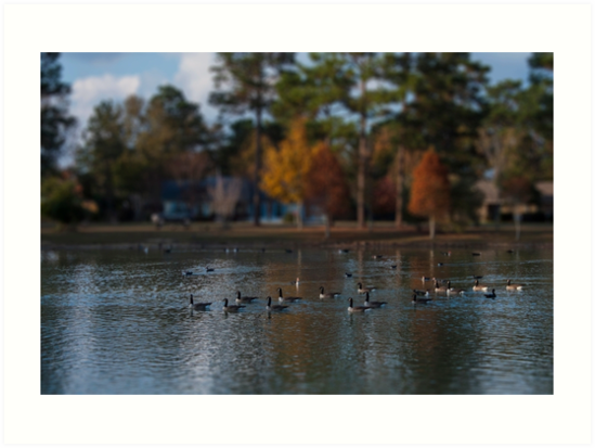 Geese on a Pond by Kelushan