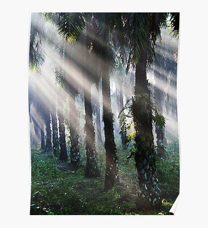 Morning Light Poster
