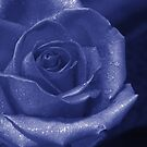 blue rose by footsiephoto