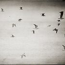 Flight by Nikki Smith