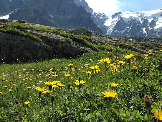 Mountain flowers 1 by HollyH14