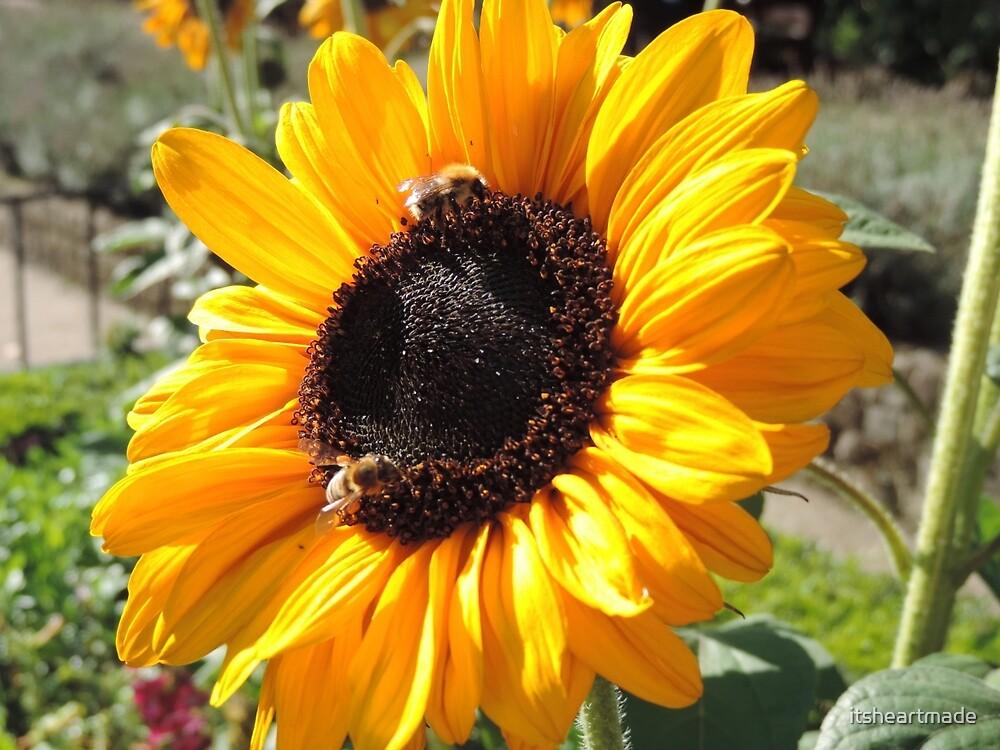 Bee Friendly Sunflower by itsheartmade