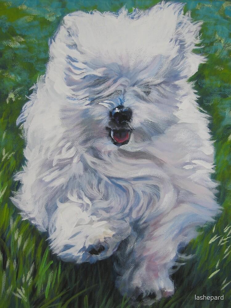 Coton De Tulear Fine Art Painting by lashepard