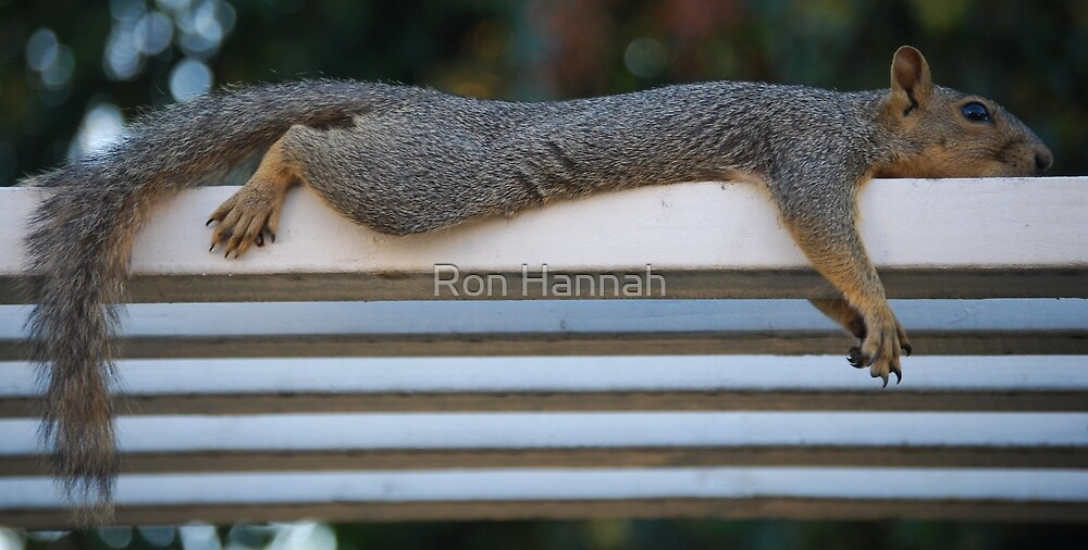Morning Chillout by Ronald Hannah