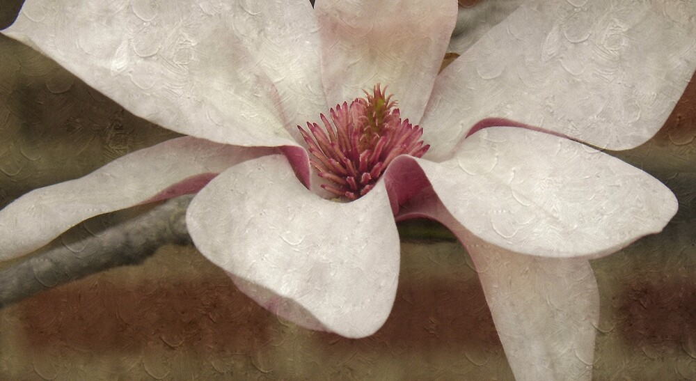 Tulip Tree Blossom by Annie Adkins