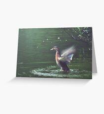 Bird in Flight at the Manx Arboretum Greeting Card